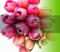 Fantabulous Flowers