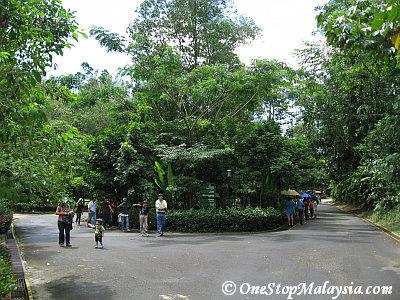 Walking Path Junction